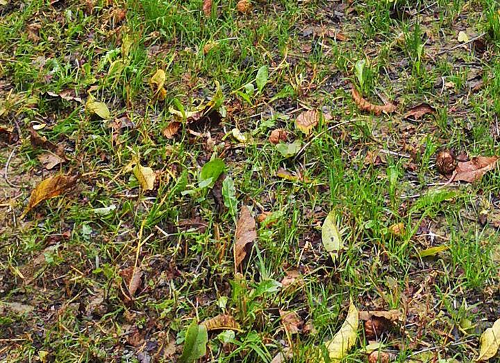 Caduta foglie - Noce d'Oro
