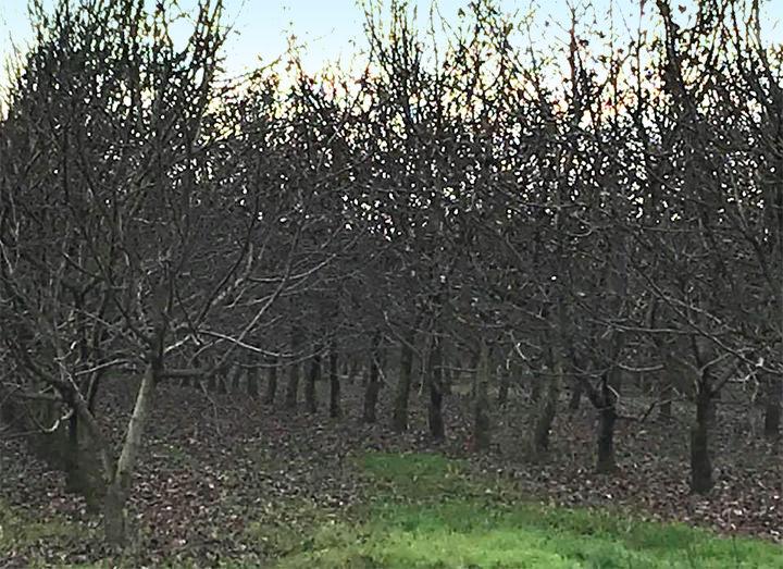 Caduta foglie, veduta del Noceto