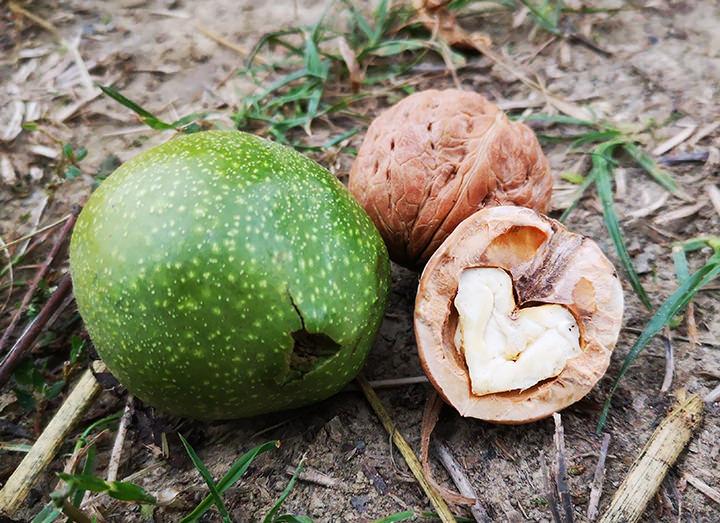 Riempimento del frutto