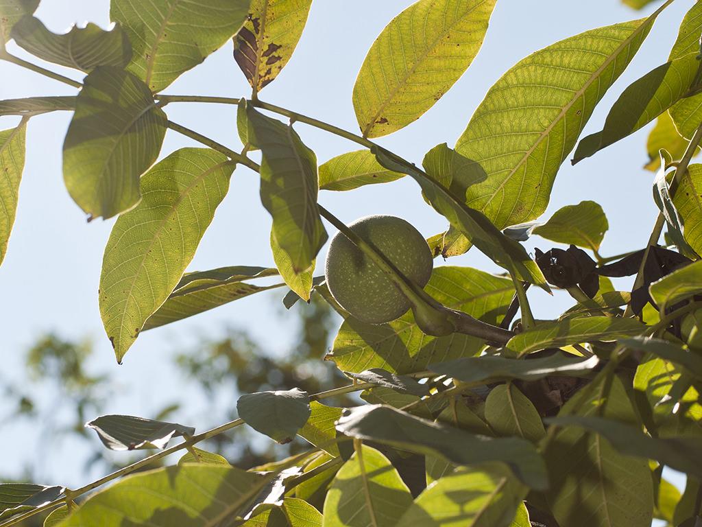 La noce sull'albero