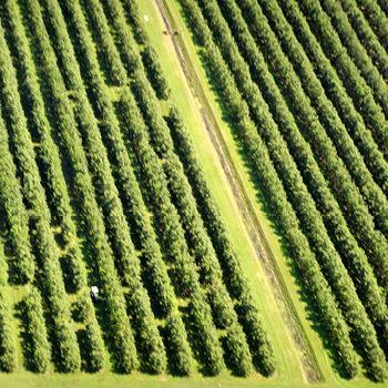 Tenuta Azienda Agricola Zambon